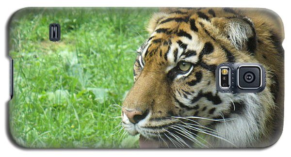 Galaxy S5 Case featuring the photograph Eye Of The Tiger by Lingfai Leung