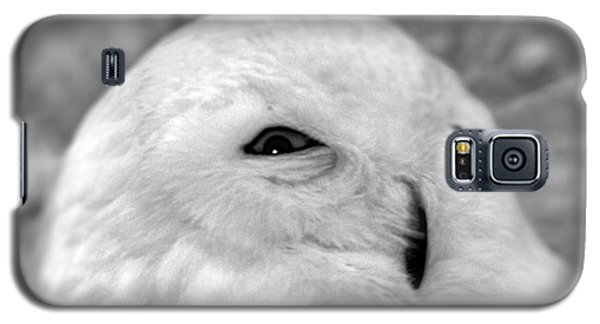 Galaxy S5 Case featuring the photograph Eye On You by Adam Olsen