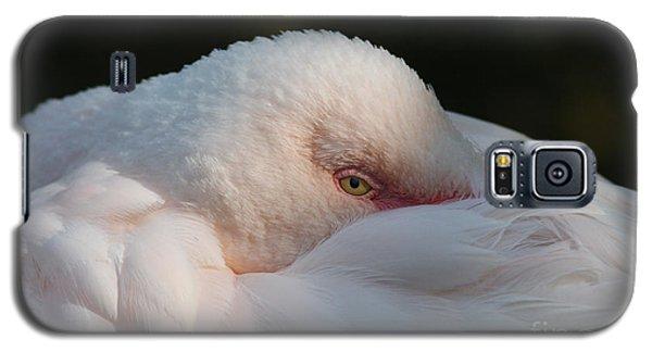Eye On You Galaxy S5 Case by Judy Whitton
