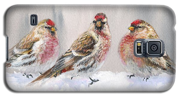 Snowy Birds - Eyeing The Feeder 2 Alaskan Redpolls In Winter Scene Galaxy S5 Case