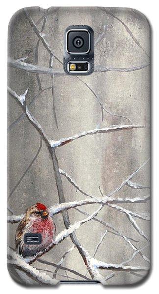 Eyeing The Feeder Alaskan Redpoll In Winter Galaxy S5 Case