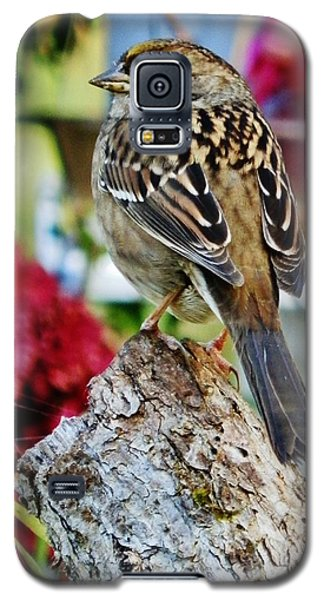 Galaxy S5 Case featuring the photograph Eyeing The Sparrow by VLee Watson