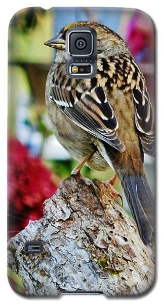 Eyeing The Sparrow Galaxy S5 Case