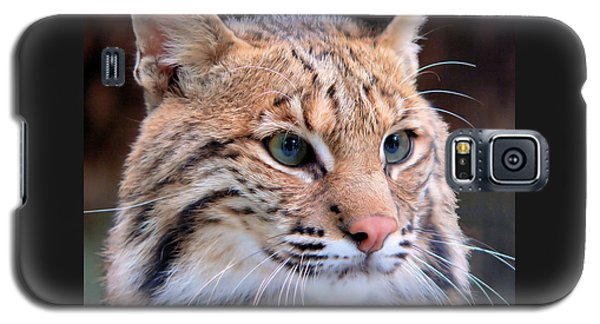 Eyes Of A Lynx Galaxy S5 Case by Rosalie Scanlon