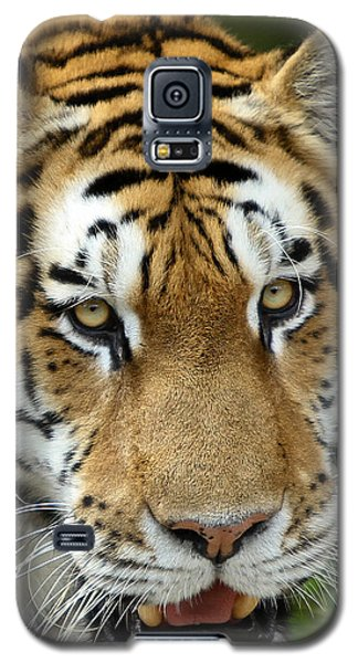 Galaxy S5 Case featuring the photograph Eyes Of The Tiger by John Haldane