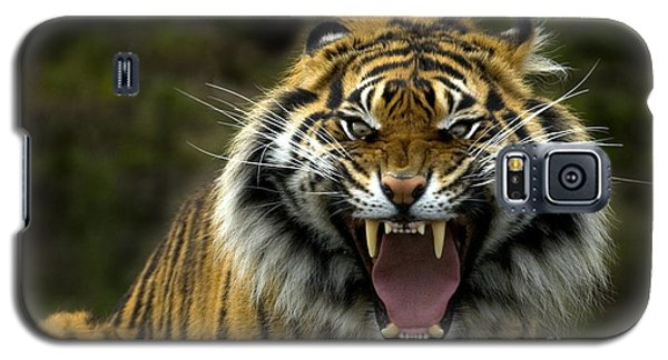 Eyes Of The Tiger Galaxy S5 Case by Mike  Dawson