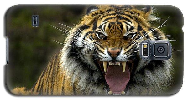 Wildlife Galaxy S5 Case - Eyes Of The Tiger by Mike  Dawson