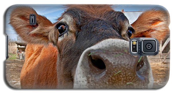 Face Of Young Jersey Cow Heifer Galaxy S5 Case