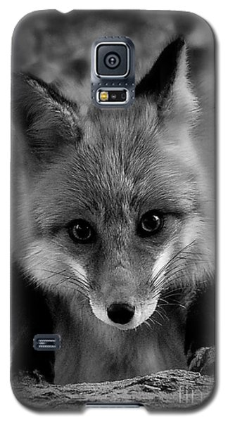 Galaxy S5 Case featuring the photograph Face To Face by Adam Olsen