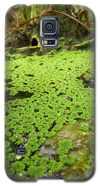 Fairy Glade Galaxy S5 Case