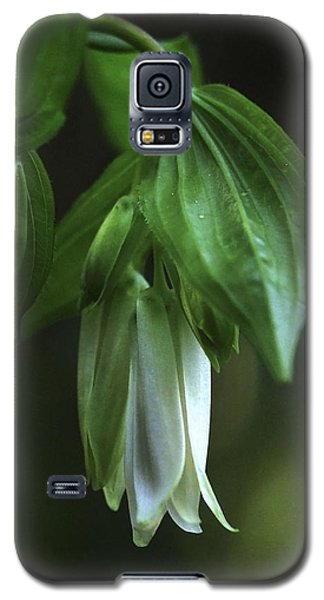 Galaxy S5 Case featuring the photograph Fairybells Of The Forest by Betty Depee