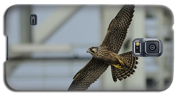 Falcon Flying By Tower Galaxy S5 Case by Bradford Martin