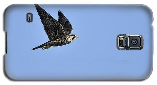 Falcon In Flight Galaxy S5 Case