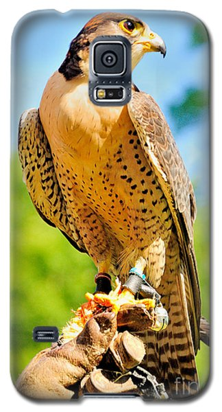 Galaxy S5 Case featuring the photograph Falcon by Nigel Fletcher-Jones