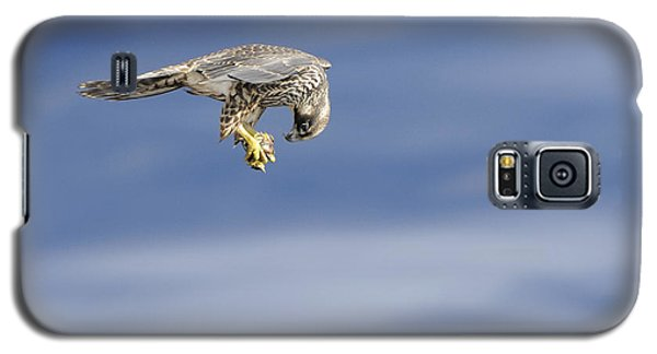 Galaxy S5 Case featuring the photograph Falcon With Prey by Bradford Martin