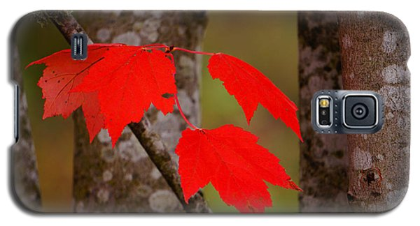 Galaxy S5 Case featuring the photograph Fall Aflame by Ronda Broatch