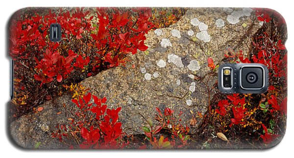 Fall Blueberries And Moss-h Galaxy S5 Case