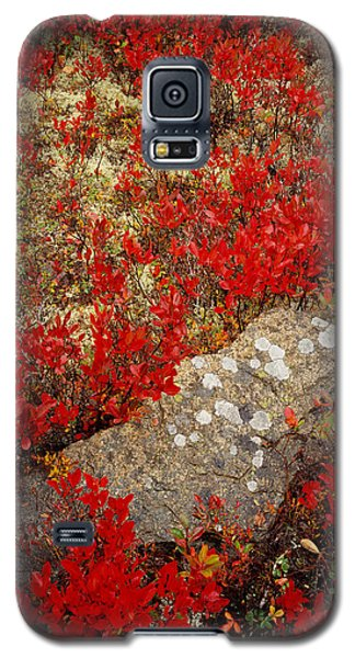 Fall Blueberries And Moss Galaxy S5 Case