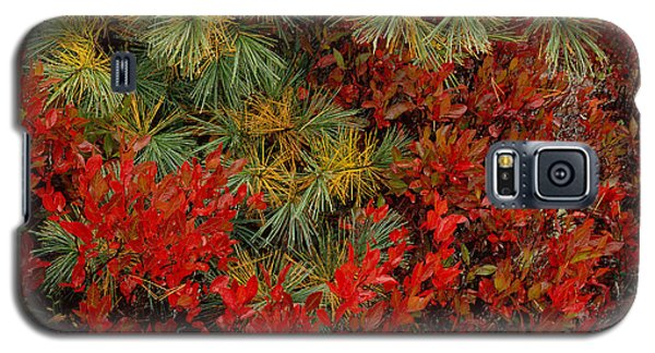 Fall Blueberries And Pine-h Galaxy S5 Case