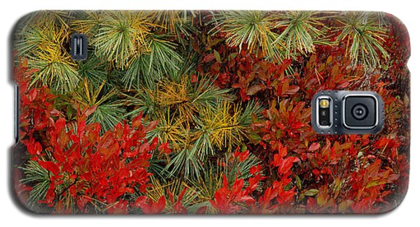 Fall Blueberries And Pine-sq Galaxy S5 Case