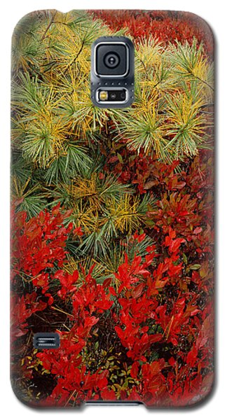 Fall Blueberries And Pine Galaxy S5 Case