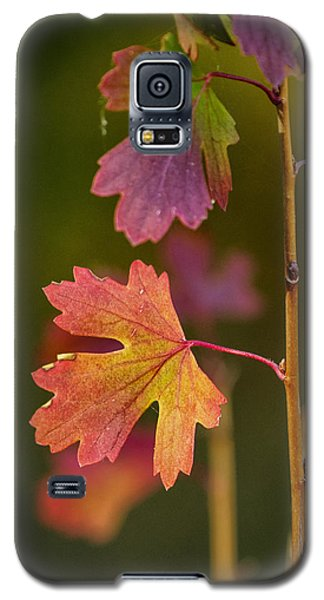 Galaxy S5 Case featuring the photograph Fall Branch by Janis Knight