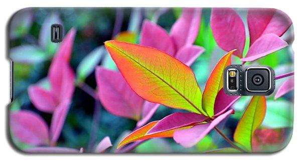 Fall Brilliance Galaxy S5 Case