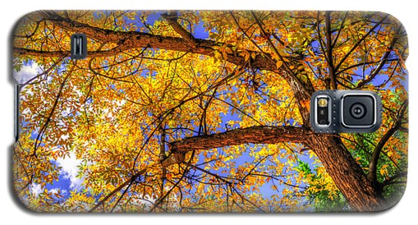 Fall Canopy 12167 Galaxy S5 Case