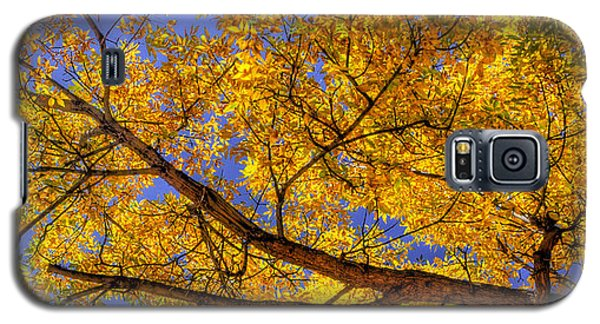 Fall Color Canopy 12161 Galaxy S5 Case
