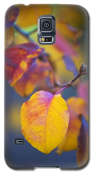 Galaxy S5 Case featuring the photograph Fall Color by Stephen Anderson