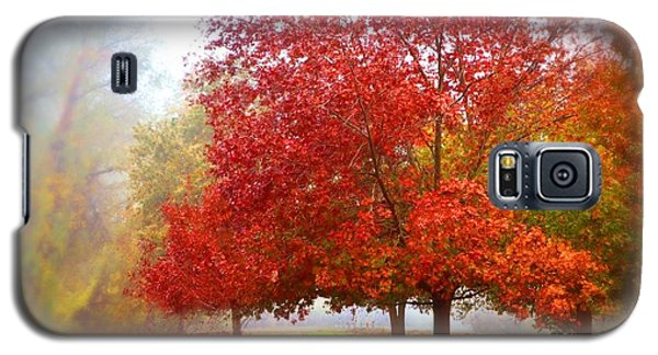 Fall Colored Trees Galaxy S5 Case
