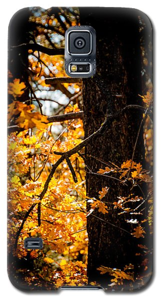 Fall Colors Galaxy S5 Case by Mickey Clausen