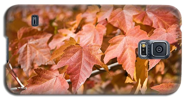 Fall Colors Galaxy S5 Case