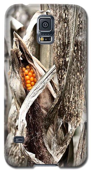 Fall Corn Galaxy S5 Case