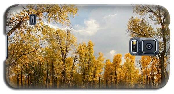 Fall Cottonwoods In Gros Ventre Galaxy S5 Case