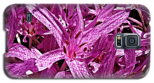 Galaxy S5 Case featuring the photograph Fall Crocus by Nick Kloepping