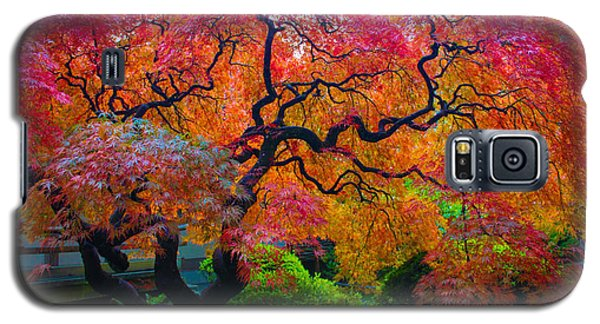 Fall Crowning Glory  Galaxy S5 Case by Patricia Babbitt
