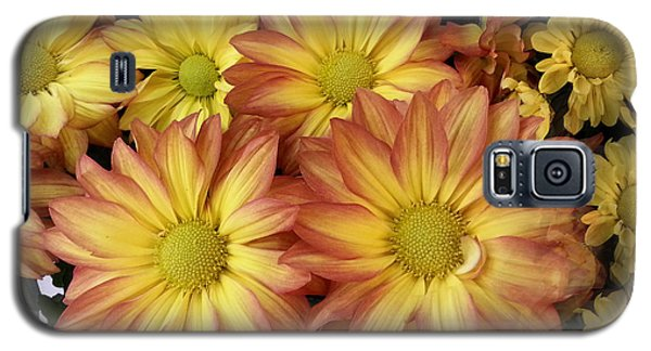 Fall Daisies Galaxy S5 Case by Donna Brown