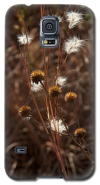 Galaxy S5 Case featuring the photograph Fall Feathers by Jane Eleanor Nicholas