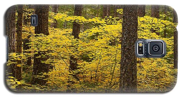 Fall Foliage Galaxy S5 Case by Belinda Greb