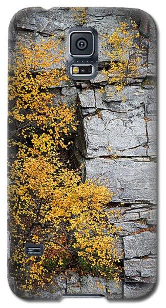 Fall Foliage Colors 01 Galaxy S5 Case