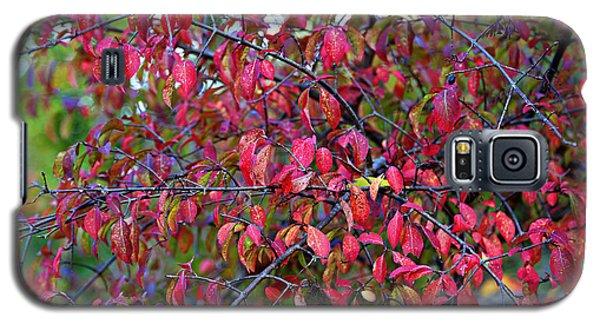 Fall Foliage Colors 05 Galaxy S5 Case