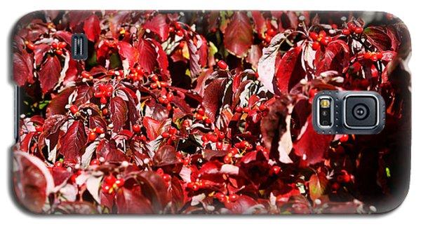 Fall Foliage Colors 08 Galaxy S5 Case