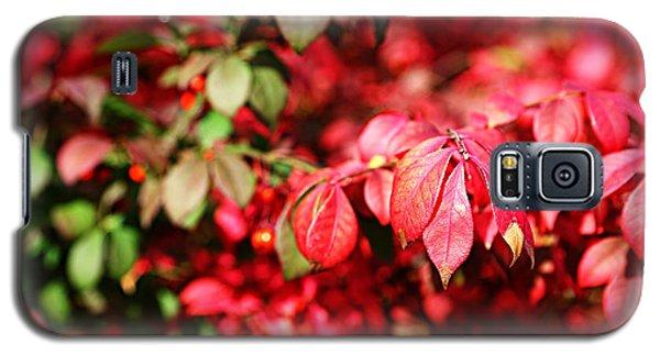 Fall Foliage Colors 10 Galaxy S5 Case