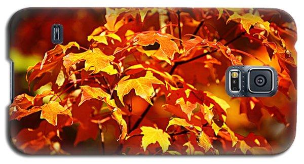 Fall Foliage Colors 14 Galaxy S5 Case