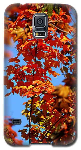 Fall Foliage Colors 15 Galaxy S5 Case