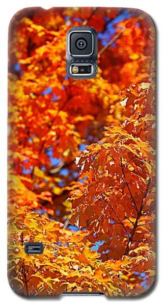 Fall Foliage Colors 17 Galaxy S5 Case