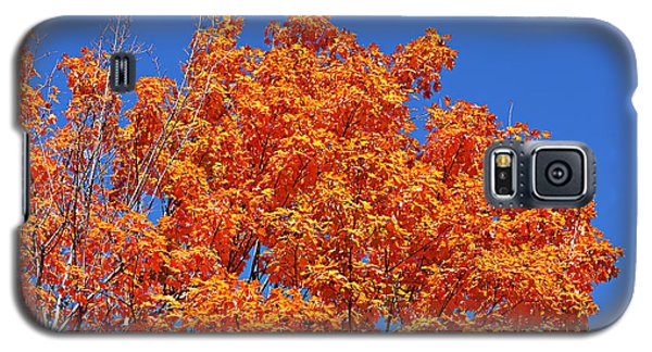 Fall Foliage Colors 19 Galaxy S5 Case