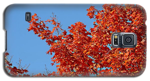 Fall Foliage Colors 20 Galaxy S5 Case