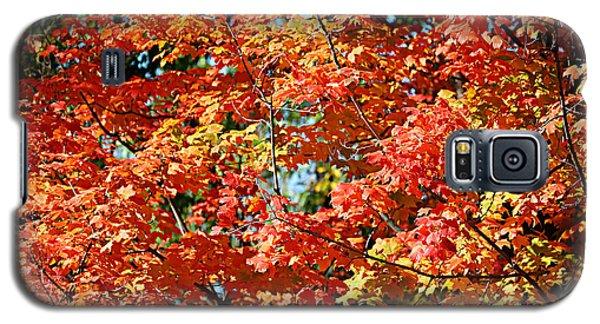 Fall Foliage Colors 22 Galaxy S5 Case
